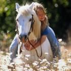 Pferdegeburtstag-Mottoparty-Willkommen