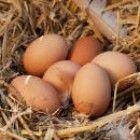 Bauerhofgeburtstag-Spiel-Eierlauf-Anleitung